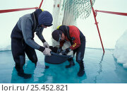 Купить «Researcher Hauke Flores and Carsten Wanke checking fishing net on ice floe. ISPOL (ICE Station Polarstern) Expedition 2004/2005 from Alfred Wegener Institute...», фото № 25452821, снято 16 августа 2018 г. (c) Nature Picture Library / Фотобанк Лори