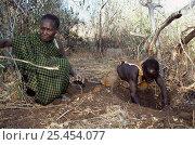 Купить «Hadzabe hunter gatherer tribeswomen digging for tubers, Lake Eyasi Basin, Tanzania 2006», фото № 25454077, снято 14 ноября 2019 г. (c) Nature Picture Library / Фотобанк Лори