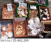 Купить «Baskets of exotic shells and sea creatures for sale on Llandudno pier, Wales, UK.», фото № 25462289, снято 15 декабря 2017 г. (c) Nature Picture Library / Фотобанк Лори