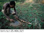 Купить «Hadzabe bushman with traditional bow (string made from giraffe tendons)  sharpening arrow. Lake Eyasi, Tanzania.», фото № 25466321, снято 14 ноября 2019 г. (c) Nature Picture Library / Фотобанк Лори
