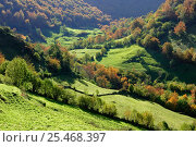 Купить «Fields and valley in Somiedo National Park. Asturias, Spain», фото № 25468397, снято 14 августа 2018 г. (c) Nature Picture Library / Фотобанк Лори