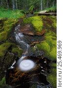 Купить «Stream running through boreal rainforest, Nord-Trondelag, Norway.», фото № 25469969, снято 21 июля 2018 г. (c) Nature Picture Library / Фотобанк Лори