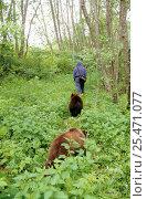 Купить «Orphan Brown bear cubs following warden, rehabilitation centre, Russia (Ursus arctos) 2003.», фото № 25471077, снято 16 июля 2019 г. (c) Nature Picture Library / Фотобанк Лори