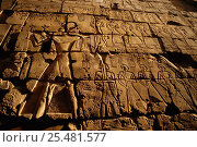 Ancient stone carvings, Luxor temple, Egypt. Стоковое фото, фотограф Staffan Widstrand / Nature Picture Library / Фотобанк Лори