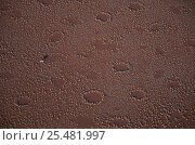 Купить «Aerial view of Namib desert with Oryx surrounded by 'fairy circles', Namibia Plants», фото № 25481997, снято 21 января 2018 г. (c) Nature Picture Library / Фотобанк Лори