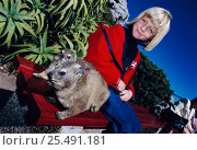 Rock hyraxes on bench beside girl {Procavia capensis} Table Mtn, Cape Town, South Africa. Стоковое фото, фотограф Jabruson / Nature Picture Library / Фотобанк Лори