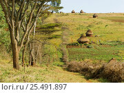 Купить «Acacia fence built to protect crops from wild animals, Mount Elgon, Kenya. 2002», фото № 25491897, снято 16 августа 2018 г. (c) Nature Picture Library / Фотобанк Лори