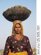 Купить «Rajasthani woman with camel excrement in basket, Camel market, Nagauer, Rajasthan, India», фото № 25505181, снято 15 августа 2018 г. (c) Nature Picture Library / Фотобанк Лори