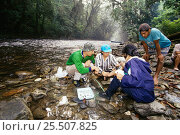 Купить «Ichthyology team collecting fish in West Kalimantan, Borneo», фото № 25507825, снято 22 июля 2018 г. (c) Nature Picture Library / Фотобанк Лори