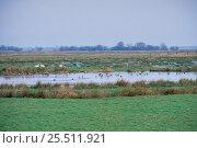 Купить «Waterfowl on West Sedgemoor RSPB Reserve in winter, Somerset, UK», фото № 25511921, снято 22 июля 2018 г. (c) Nature Picture Library / Фотобанк Лори