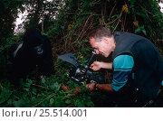 Купить «Photographer filming Mountain gorilla {Gorilla beringei} in the wild, Virunga NP, Dem Rep Congo», фото № 25514001, снято 17 ноября 2019 г. (c) Nature Picture Library / Фотобанк Лори