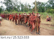 Купить «Maasai warriors carry cermonial log in traditional Eunoto ceremony, Masai Mara, Kenya», фото № 25523033, снято 2 июня 2020 г. (c) Nature Picture Library / Фотобанк Лори