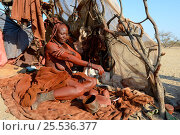 Himba woman in her temporary hut applying Otjize (a mixture of butter, ochre and ash) to her skin. Marienf luss valley. Kaokoland, Namibia October 2015. Стоковое фото, фотограф Eric Baccega / Nature Picture Library / Фотобанк Лори