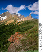 Купить «Summer in the alpine glades of Mount Athabasca, Banff National Park, Rocky Mountains Alberta, Canada», фото № 25536689, снято 31 мая 2020 г. (c) Nature Picture Library / Фотобанк Лори