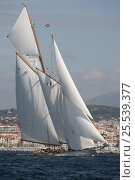 Купить «Classic yacht during Cannes Royal Regatta, France, 2007. All non-editorial uses must be cleared individually.», фото № 25539377, снято 21 августа 2018 г. (c) Nature Picture Library / Фотобанк Лори