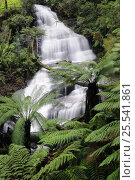 Triplet Falls on Aire River, Great Otway National Park, Victoria, Australia. Стоковое фото, фотограф Jouan Rius / Nature Picture Library / Фотобанк Лори