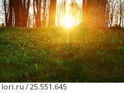 Купить «Forest sunset landscape - forest trees with grass on the foreground», фото № 25551645, снято 4 мая 2016 г. (c) Зезелина Марина / Фотобанк Лори