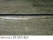 Купить «Фон старая позеленевшая доска», фото № 25557421, снято 11 августа 2016 г. (c) Евгений Рашевский / Фотобанк Лори