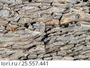 Купить «Скальная порода в виде слоёв под воздействием эрозии», фото № 25557441, снято 14 августа 2016 г. (c) Евгений Рашевский / Фотобанк Лори