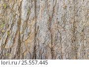 Купить «Пласты скальных пород», фото № 25557445, снято 14 августа 2016 г. (c) Евгений Рашевский / Фотобанк Лори