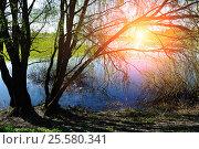 Купить «Spring landscape - willow under sunshine on the bank of the river», фото № 25580341, снято 5 мая 2016 г. (c) Зезелина Марина / Фотобанк Лори
