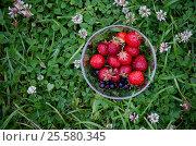 Миска с клубникой на фоне зеленого клевера. Стоковое фото, фотограф Екатерина Душенина / Фотобанк Лори