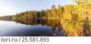 Купить «Освещенный солнцем лес на берегу озера Угольное на острове Соловки», фото № 25581893, снято 20 августа 2013 г. (c) Дмитрий Тищенко / Фотобанк Лори