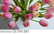 Close-up of a bouquet of tulips on a light background. Стоковое видео, видеограф Сергей Кальсин / Фотобанк Лори