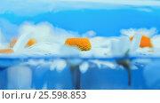 Blurred Delicate Blue Floral Background. Стоковое фото, фотограф Светлана Сухорукова / Фотобанк Лори