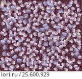 Купить «Красочный фон текстура», иллюстрация № 25600929 (c) Сергей Тихонов / Фотобанк Лори