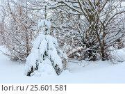 Купить «Winter Carpathian Mountains landscape.», фото № 25601581, снято 15 января 2017 г. (c) Юрий Брыкайло / Фотобанк Лори