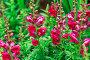 Summer flowers outdoors, фото № 25602601, снято 28 июля 2016 г. (c) Ярочкин Сергей / Фотобанк Лори