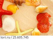 Купить «Fingerfish, seastar and seashells in sand», фото № 25605745, снято 3 февраля 2016 г. (c) Ярочкин Сергей / Фотобанк Лори