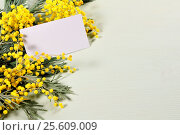 Купить «8 March card - white card with space for text in the mimosa flowers», фото № 25609009, снято 9 марта 2016 г. (c) Зезелина Марина / Фотобанк Лори