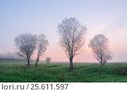 Купить «Пейзаж ранним летним туманным утром на рассвете в поле с деревьями», фото № 25611597, снято 4 июня 2016 г. (c) Горшков Игорь / Фотобанк Лори