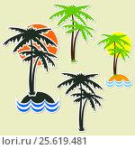 Different palm. Стоковая иллюстрация, иллюстратор Silanti / Фотобанк Лори