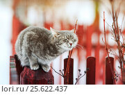 Sweet tabby cat walks in the spring in the village and fondled. Стоковое фото, фотограф Бачкова Наталья / Фотобанк Лори
