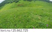 Купить «Path in alpine meadows», видеоролик № 25662725, снято 27 марта 2016 г. (c) Потийко Сергей / Фотобанк Лори