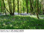 Купить «Весна в лесу», фото № 25662809, снято 15 мая 2016 г. (c) Татьяна Кахилл / Фотобанк Лори