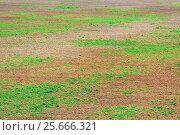 Купить «Ground with green vegetation», фото № 25666321, снято 3 сентября 2016 г. (c) Алексей Яговкин / Фотобанк Лори