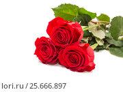 Купить «Три красные розы на белом фоне», фото № 25666897, снято 6 февраля 2017 г. (c) Юлия Бабкина / Фотобанк Лори