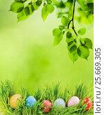 Row of Easter eggs in Fresh Green Grass. Стоковое фото, фотограф Валерия Лузина / Фотобанк Лори