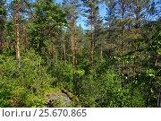 Forest landscape in russian taiga. Стоковое фото, фотограф Михаил Коханчиков / Фотобанк Лори