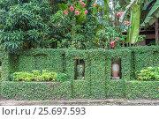 Купить «Ландшафтный дизайн. Зеленая ограда на улице города Ао Нанг. Таиланд, провинция Краби», фото № 25697593, снято 1 февраля 2017 г. (c) Владимир Сергеев / Фотобанк Лори