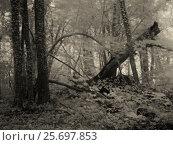 Купить «Forest, leafless trees in winter», фото № 25697853, снято 24 июля 2005 г. (c) mauritius images / Фотобанк Лори