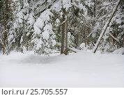 Купить «Winter in Primorsky krai, Russia», фото № 25705557, снято 17 февраля 2007 г. (c) Георгий Хрущев / Фотобанк Лори
