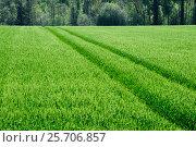 Купить «Зеленое поле со всходами», фото № 25706857, снято 13 мая 2016 г. (c) Татьяна Кахилл / Фотобанк Лори