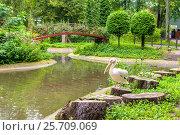 Купить «Калининградский зоопарк. Пеликан.», фото № 25709069, снято 29 августа 2016 г. (c) Sergei Gushchin / Фотобанк Лори