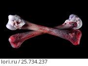 Купить «Две перекрещенных кости», фото № 25734237, снято 2 июня 2020 г. (c) Mike The / Фотобанк Лори