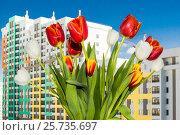 Купить «Букет тюльпанов на окне новой квартиры», фото № 25735697, снято 8 марта 2017 г. (c) Сергеев Валерий / Фотобанк Лори